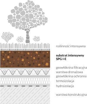 Schemat przykładu zastosowania substratu intensywnego na dachu zielonym
