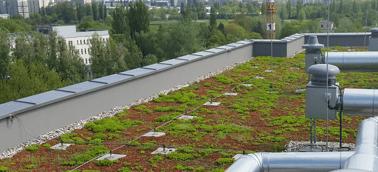 Dachy zielone - Dachy ekstensywne