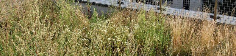 Łąka kwietna FLL (mieszanka nasion traw i ziół) - dach zielony