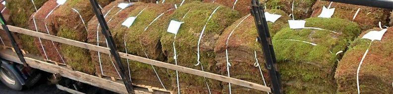 Prekultywowana mata wegetacyjna PMW na dach zielony
